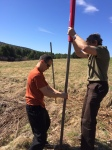 Pounding in a fence post